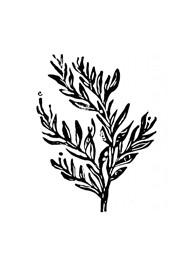 Xilogravura Árvore by Mangarataia (16 cm x 18 cm)
